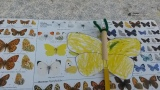 A Brimstone Butterfly, made by one of the children at the fair.
